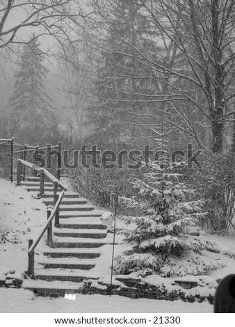 Snowfall on the steps and trees - Lake effect snow in upstate New York.