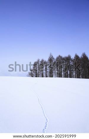Snowfield With Footprints On
