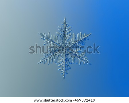 Snowflake on gray/blue gradient background. This is macro photo of real snow crystal: stellar dendrite with complex structure.