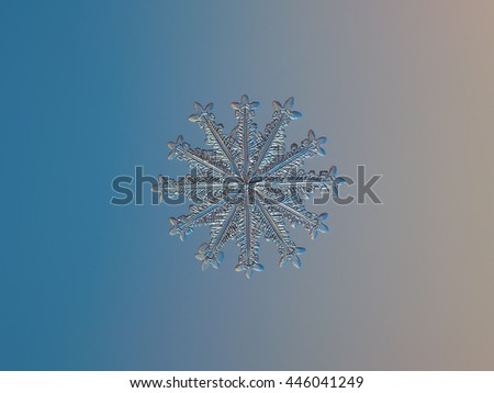 Snowflake on smooth gradient background: macro photo of rare snow crystal with twelve arms, on glass surface with LED back light. This is medium size snowflake with 12 symmetrical spear-like branches. - stock photo