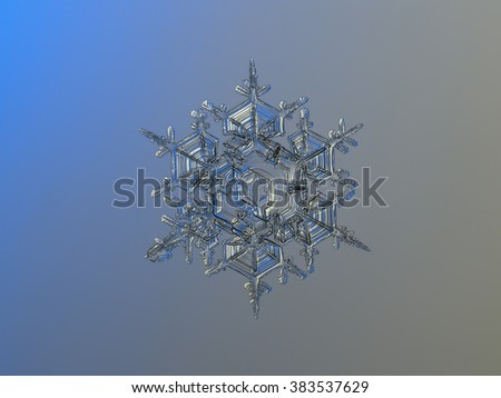 "Snowflake on smooth gradient background: macro photo of real snow crystal on glass surface with LED back light. This is large snowflake of ""splitted plate / stellar dendrite"" type. - stock photo"