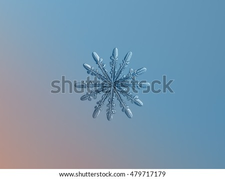 Snowflake on smooth pink-blue gradient background. This is macro photo of rare snow crystal with twelve arms and fine symmetry.