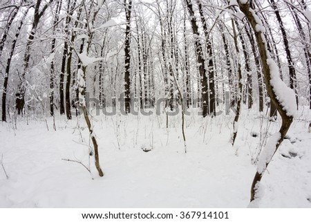 Snowing landscape in the park. Fisheye lens effects