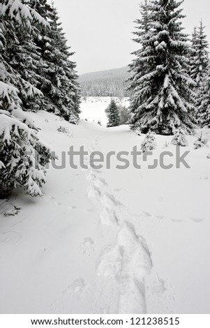 Snowshoe Footprints in Winter Forest, Krusne Mountains, Czech Republic - stock photo