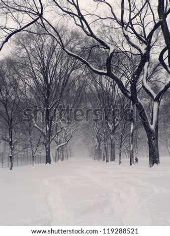 Snowstorm in Central Park - stock photo