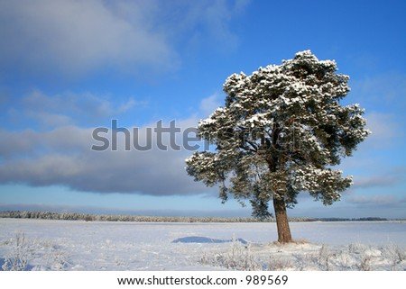 Snowy - stock photo