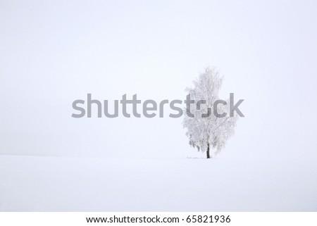 Snowy birch tree agains clear blue sky in winter landscape - stock photo