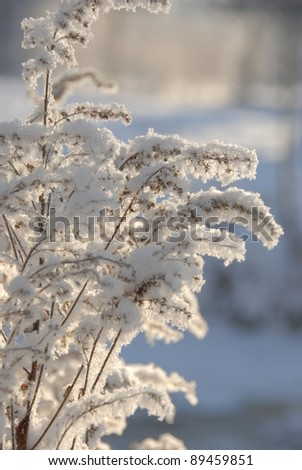 Snowy branches - stock photo