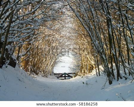 Snowy corridor - stock photo