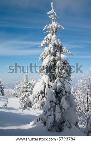 snowy fir tree in winter mountains landscape