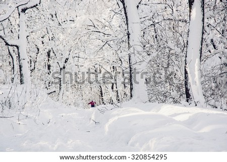 Snowy footpath in beautiful winter forest. Seasonal natural scene. - stock photo