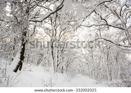 Snowy footpath in beautiful winter forest. Seasonal natural scene. Sunny day. - stock photo