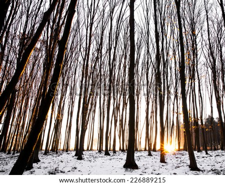 Snowy forest at dawn. Sunrise in the  forest, beautiful road. nature - stock photo