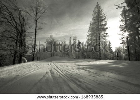 snowy forest, ski slope - stock photo