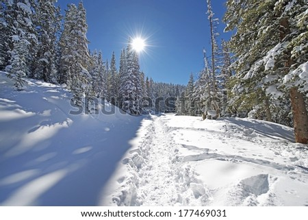 Snowy Forest Trail Path in Colorado Backcountry. Cold and Sunny Hiking Day. - stock photo