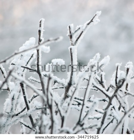 Snowy Frosty Tree Branches And Twigs, Large Detailed Hoarfrost Macro Closeup, Gentle Bokeh Detail, White Frost And Snow Backdrop, Blue Key Background - stock photo