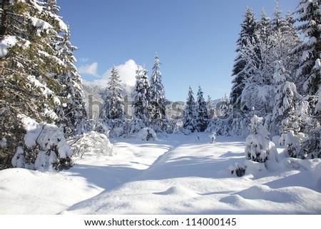 snowy landscape - stock photo