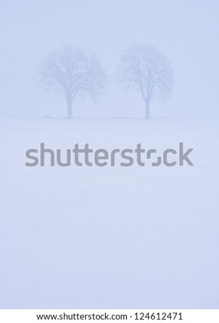 Snowy Landscape. Bare tree in snow and fog
