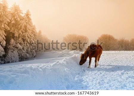 snowy landscape  on the hill with horse - stock photo
