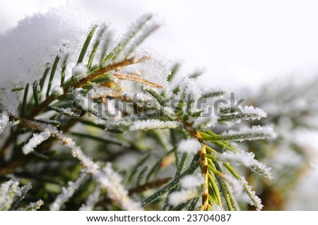 snowy leaves - stock photo