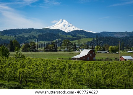Snowy Mount Hood among apple orchards in the hood River Valley, Oregon - stock photo