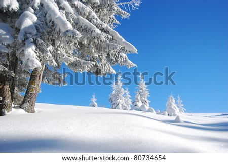 snowy mountain forest - stock photo