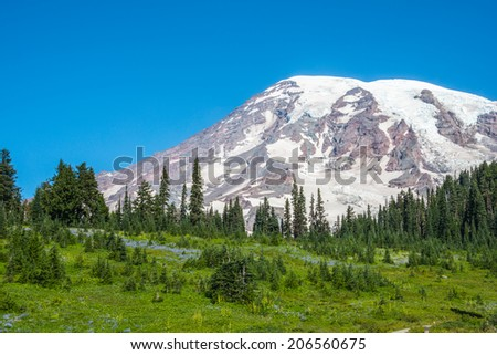 Snowy Mountain Peak  Wildflowers Green Forest and Blue Sky. Copy space. - stock photo