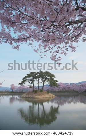 Snowy mountains visible from the cherry blossom lens