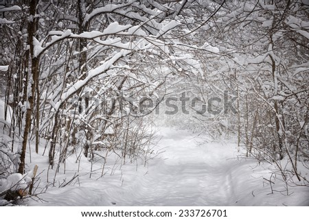Snowy path through forest with heavy branches under snow in winter blizzard. Ontario, Canada. - stock photo