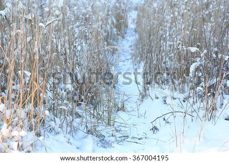 snowy path through the reeds at winter day - stock photo