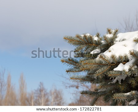 Snowy pine branch with a fresh white covering of winter snow against a clear blue winter sky with copyspace - stock photo