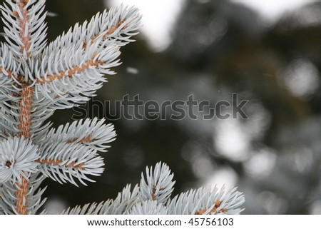 Snowy Pine Tree Top - stock photo