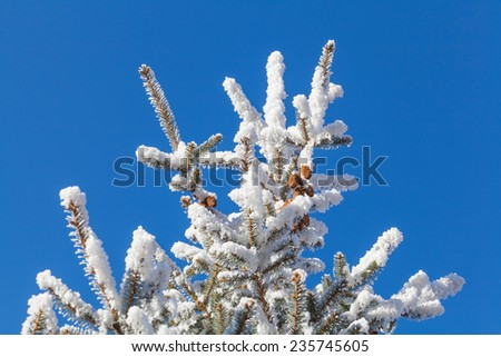snowy pine tree with clear blue sky - stock photo