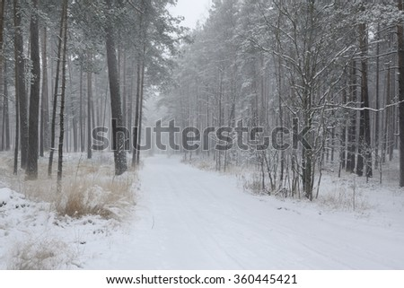 Snowy road in winter woods - stock photo