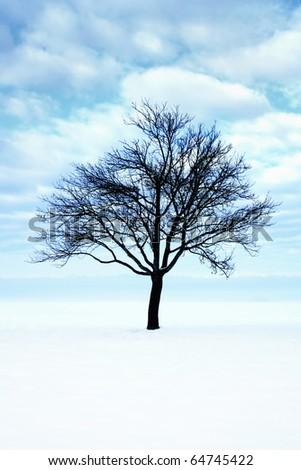Snowy scene with bare tree - stock photo
