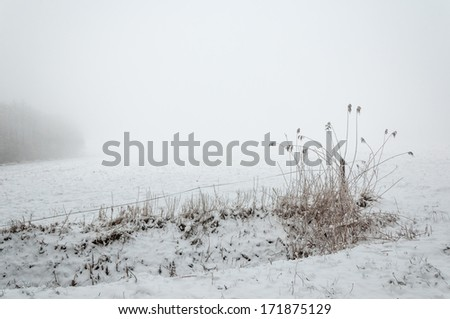 Snowy seed heads of reeds on a cold and misty day in the winter season. - stock photo