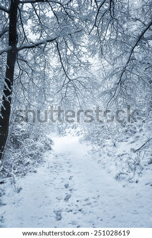 Snowy shape in the northern Italian wood - stock photo