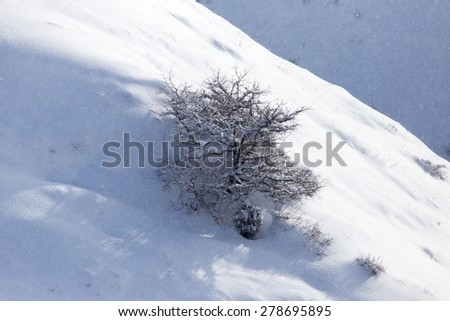 snowy slopes of the Tien Shan Mountains - stock photo
