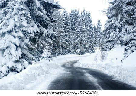 snowy street surrounded by pine trees - stock photo
