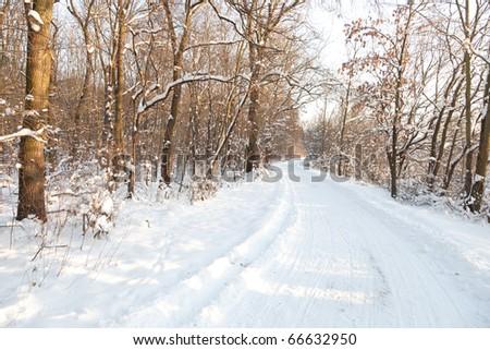Snowy track - stock photo
