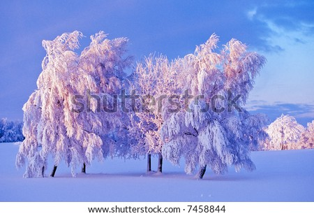 Snowy tree at dusk on the field - stock photo