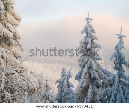 Snowy trees and a blue sky - stock photo