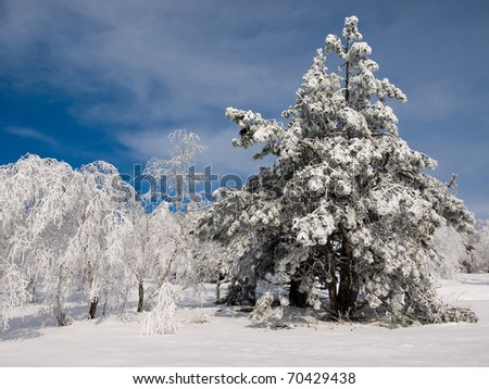 Snowy trees and blue sky.