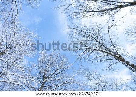 snowy trees before blue sky - stock photo