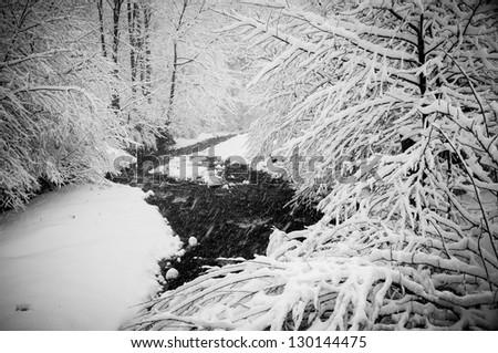 Snowy trees in winter - stock photo