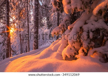 Snowy trees in winter forest in middle of winter - stock photo