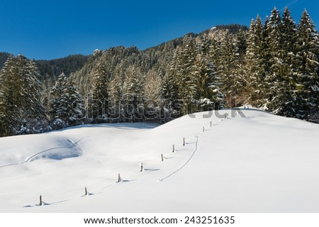 snowy trees of forest with snow meadow and blue sky - stock photo