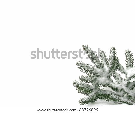 Snowy twig of the spruce - stock photo
