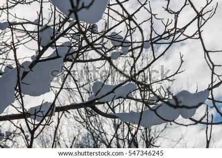 snowy winter branches background close-up
