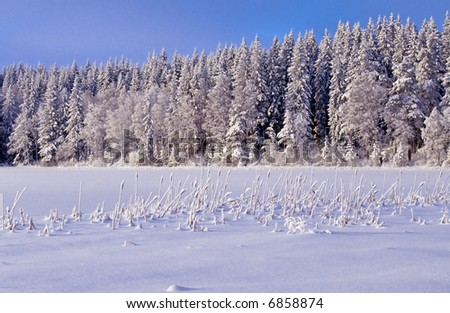 Snowy winter forest - stock photo